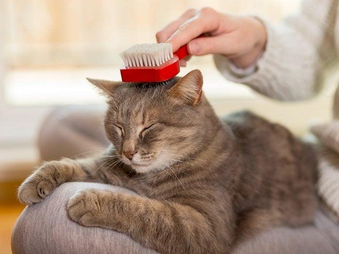 Toilettage: quelles brosses faut-il pour son chat?
