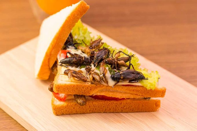Un sandwich aux insectes est bon pour la santé.