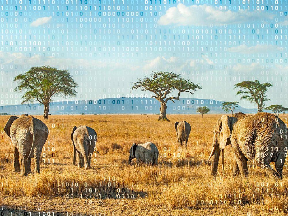 Voyage virtuel: visitez l'Afrique.