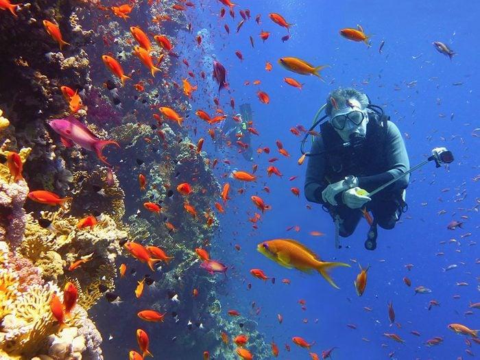 Deux hypothèses pour l'avenir de la Grande Barrière de corail.