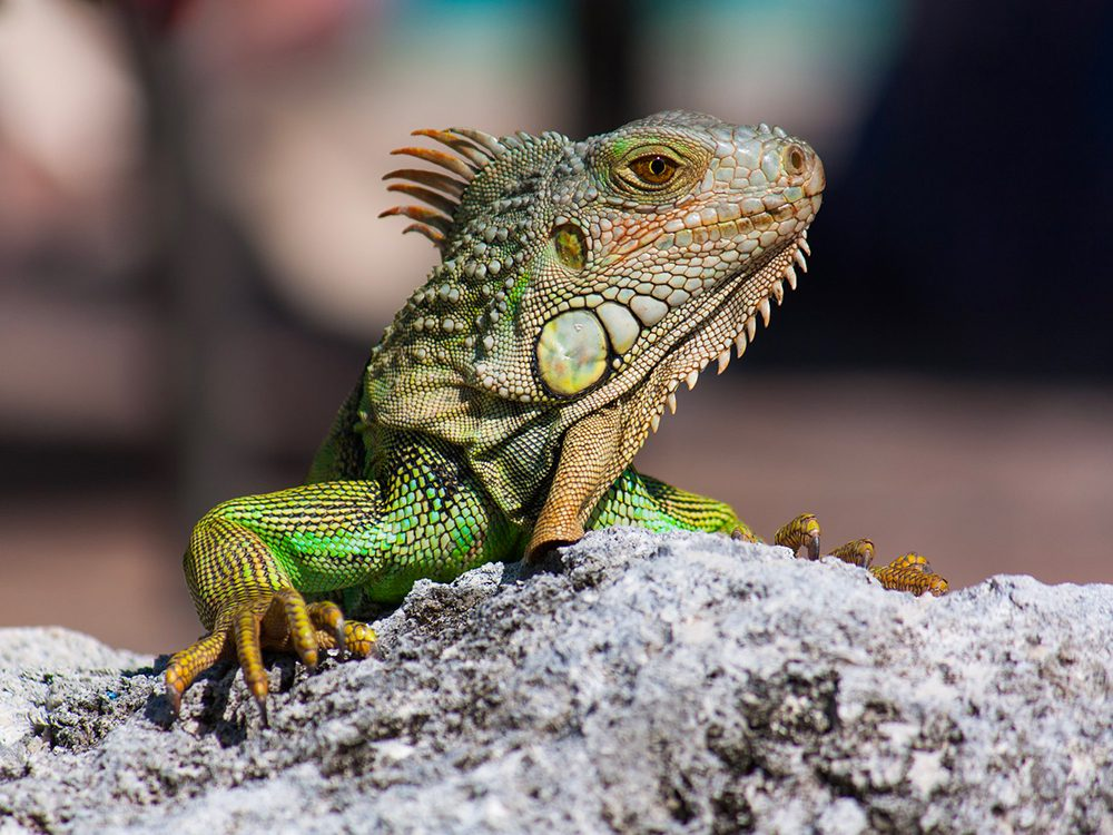 Les reptiles peuvent provoquer des allergies.