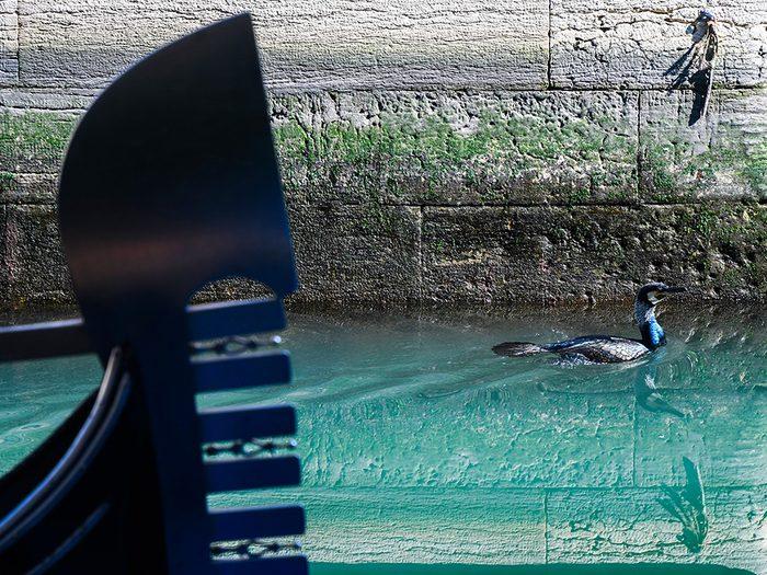 Des oiseaux de mer à Venise pendant la pandémie de coronavirus.