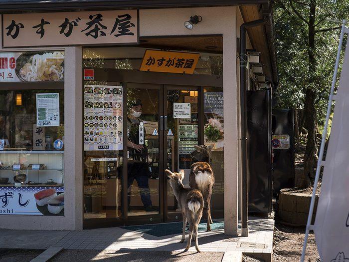 Des cerfs à Nara pendant la pandémie de coronavirus.