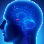 Entraîner son cerveau: 14 exercices pour stimuler ses neurones