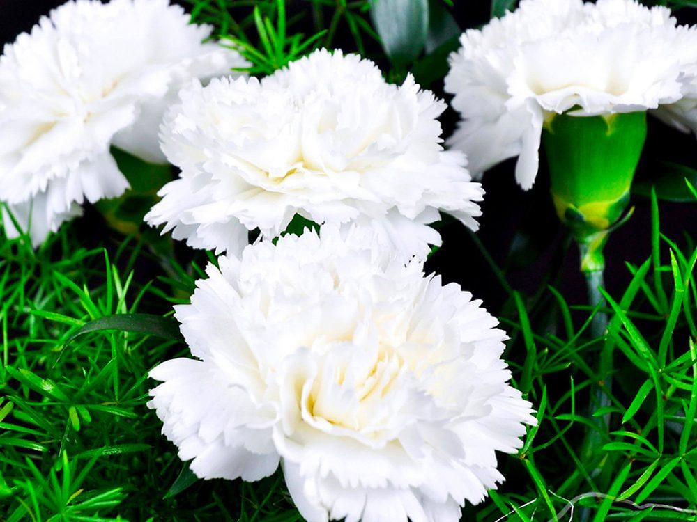 Fête des Mères: passez sur ces roses trop chères...