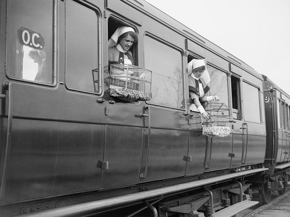 Ces infirmières ont pu apporter leurs canaris au front en 1918.