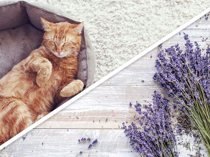 Le traitement parfumé antipuces pour chat est l'un des produits pour animaux que vous pouvez faire à la maison.