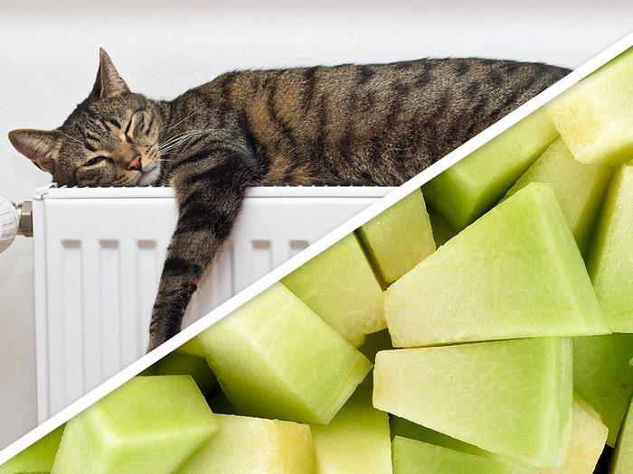 Les carrés de melon font partie des produits pour animaux que vous pouvez faire à la maison.