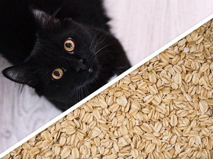 Le shampoing sec pour chat est l'un des produits pour animaux que vous pouvez faire à la maison.