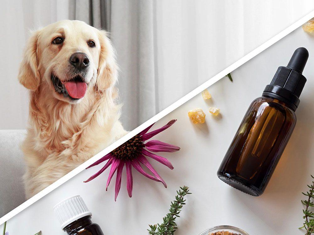 La poudre antipuce aux huiles essentielles pour chien est l'un des produits pour animaux que vous pouvez faire à la maison.