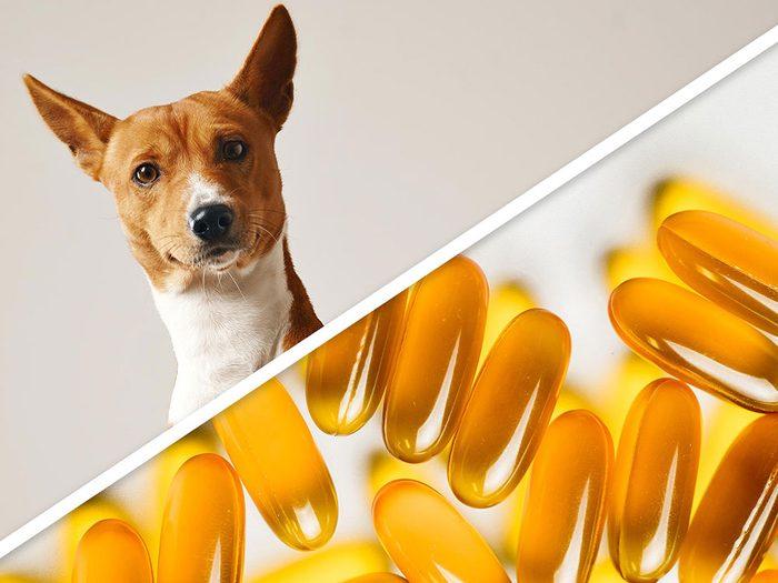 L'huile antiacarienne à la vitamine E pour chien est l'un des produits pour animaux que vous pouvez faire à la maison.