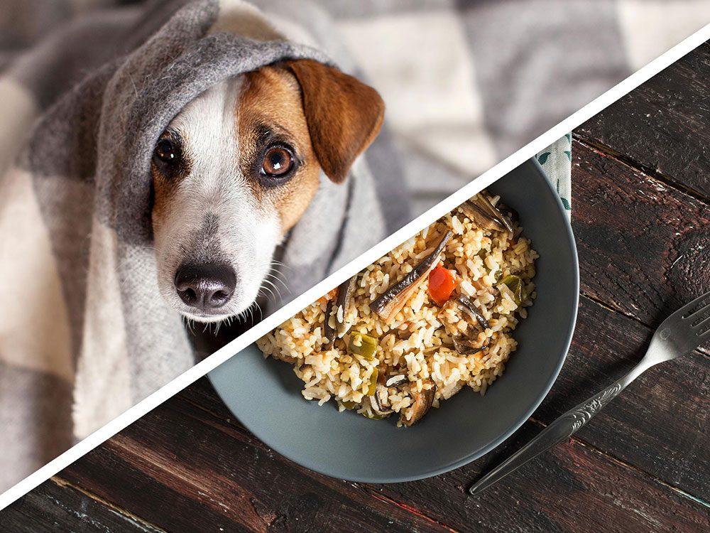 Le dîner au poulet et au gruau pour chien est l'un des produits pour animaux que vous pouvez faire à la maison.