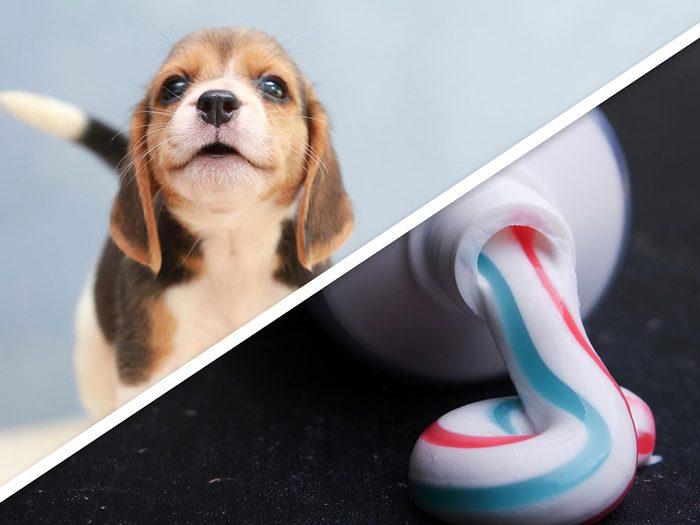 Le nettoyant désodorisant pour chien à la menthe pour chien est l'un des produits pour animaux que vous pouvez faire à la maison.