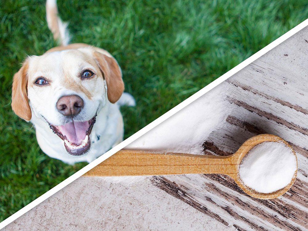 Le shampoing sec pour chien est l'un des produits pour animaux que vous pouvez faire à la maison.