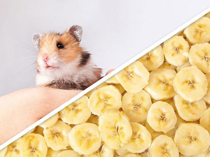 La coupe sucrée aux bananes pour hamster est l'un des produits pour animaux que vous pouvez faire à la maison.