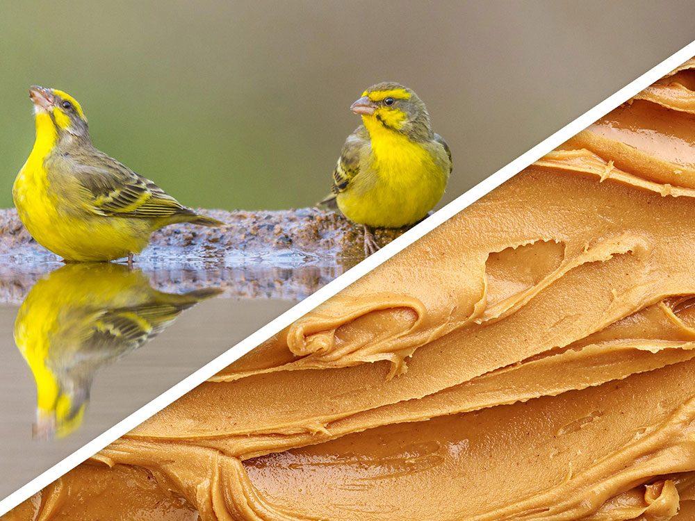 Les friandises aux arachides pour oiseau font partie des produits pour animaux que vous pouvez faire à la maison.