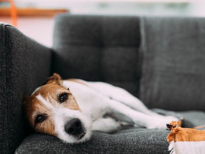 Faites attention si votre chien se met à boiter et clopiner.