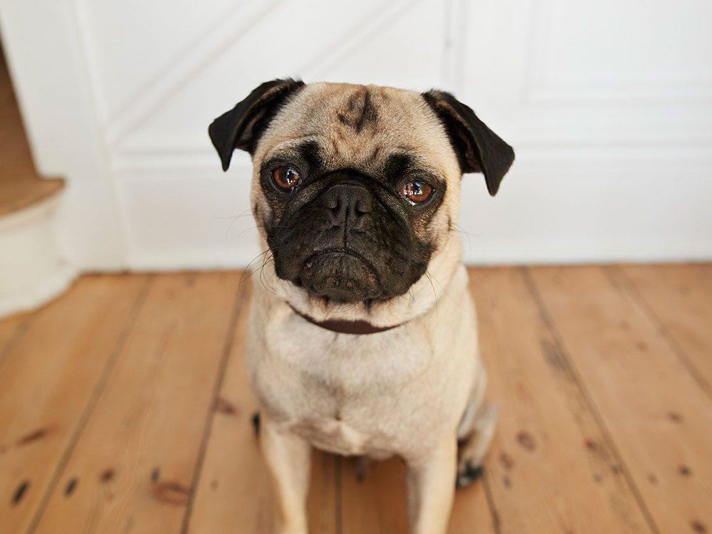 Les signaux SOS de votre chien.