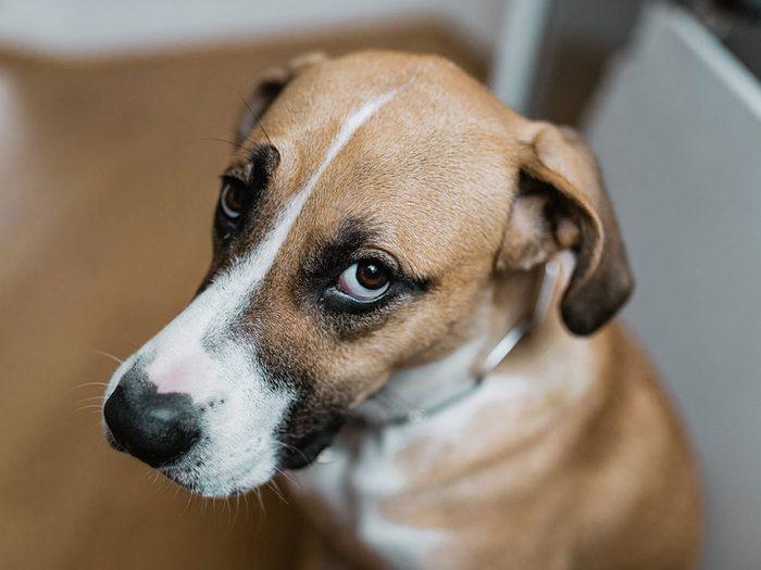 Faites attention si votre chien défèque de manière inappropriée.
