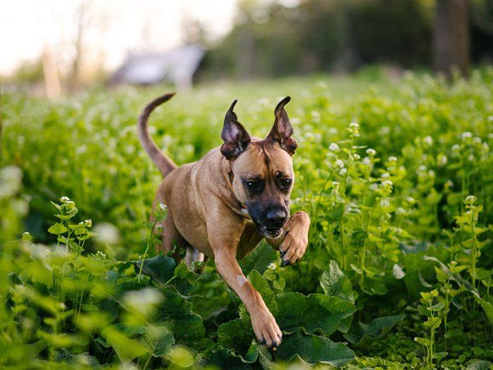 Faites attention si votre chien montre un changement d'activité.
