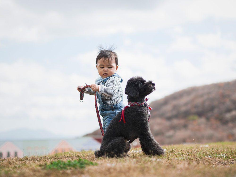 Ce bébé promène déjà son chien tout seul.
