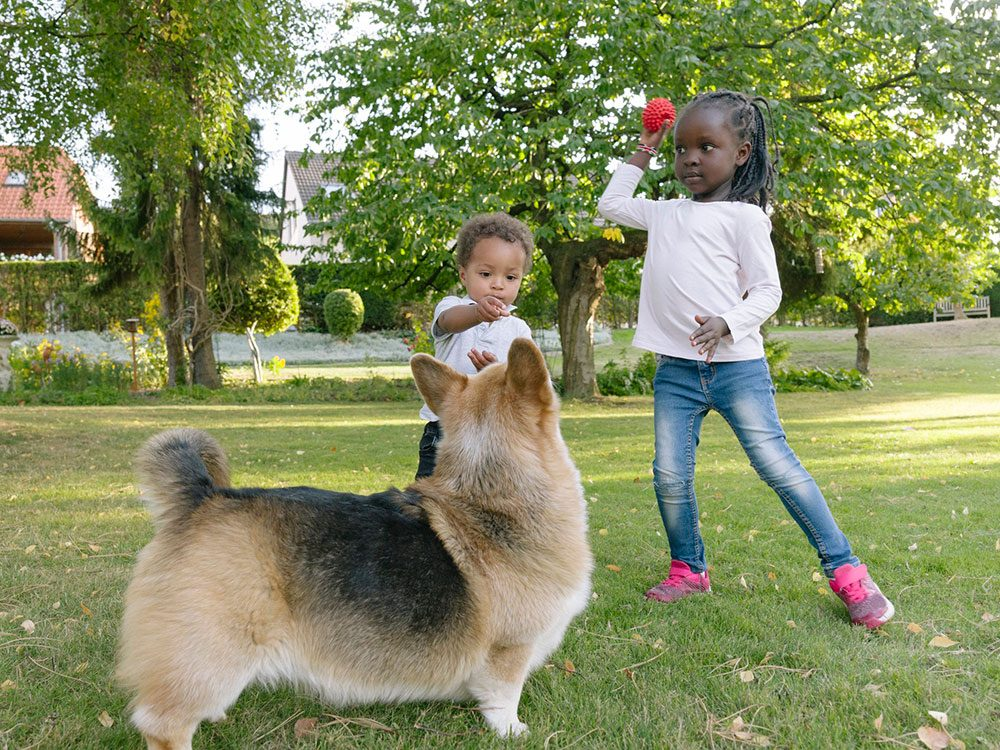 Ce chien attend impatiemment que la balle soit lancée par ce bébé.