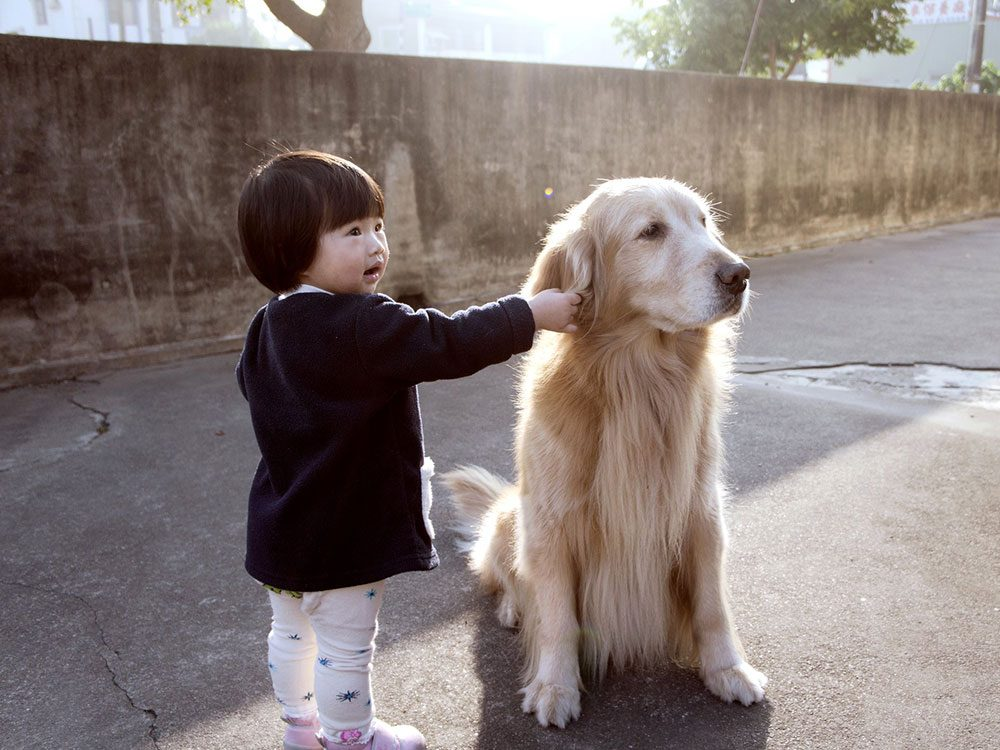 Chien et bébé: une oreille attentive!