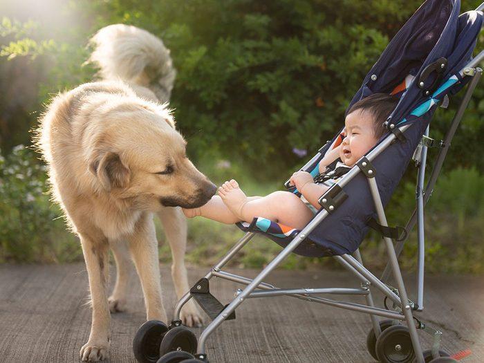 Rien de tel que la promenade du matin entre chien et bébé.
