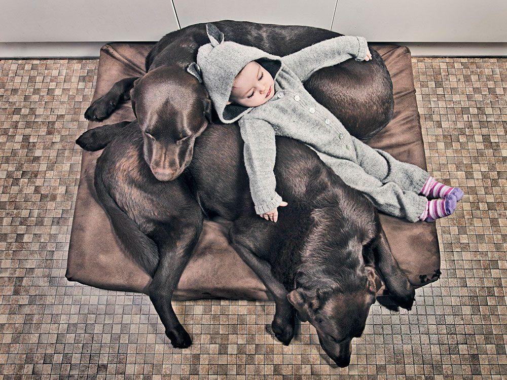 Petite sieste entre chiens et bébé.