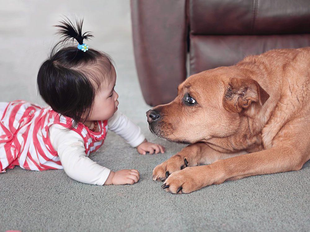 Ce chien veille sur ce bébé.