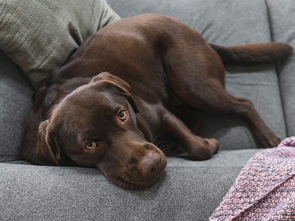 Faites attention si votre chien n'est pas aussi affectueux que d'habitude.