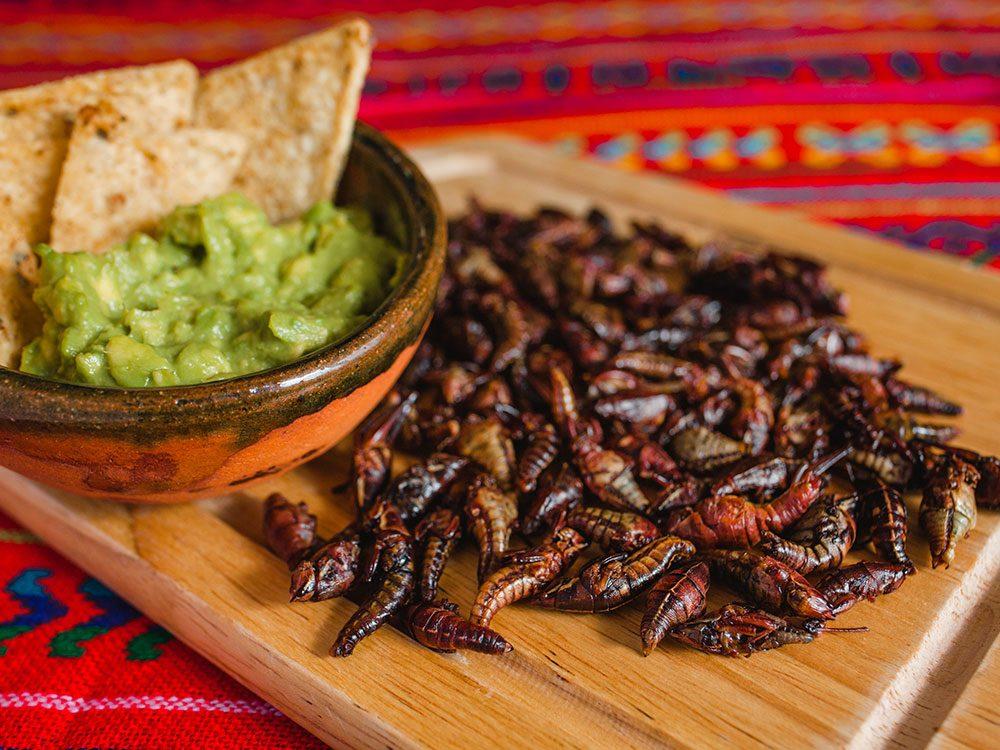 Les insectes comestibles sont très savoureux.