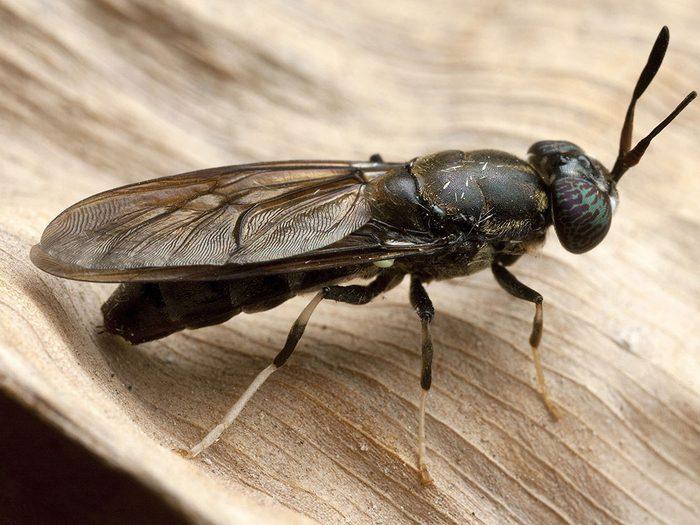 Les insectes comestibles sont en pleine expansion au Québec.