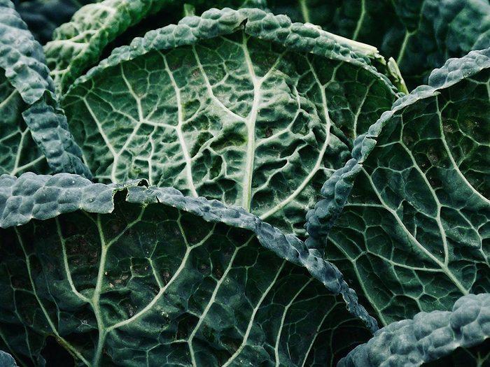 Le chou frisé (kale) fait partie des légumes qui poussent en un temps record dans le potager!