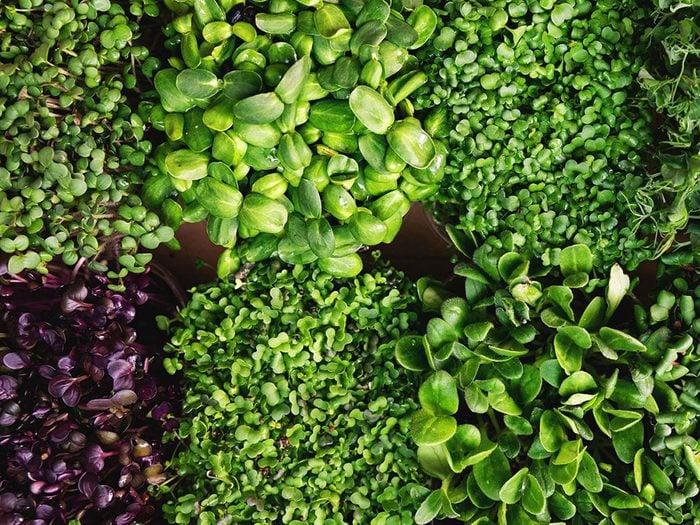 Les micropousses font partie des légumes qui poussent en un temps record dans le potager!