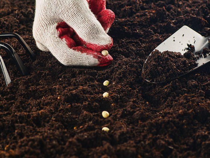 Les semences sont réutilisables.