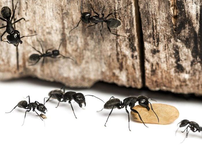 Solutions simples pour se débarrasser des fourmis (pour de bon!).