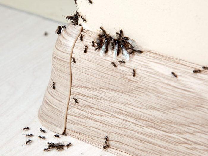 Sceller même les plus petits espaces pour se débarrasser des fourmis.