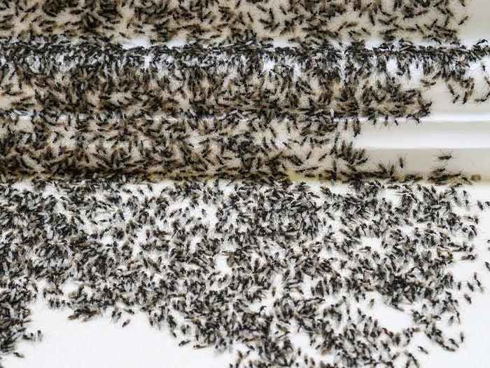 Quoi faire pour se débarrasser des fourmis.