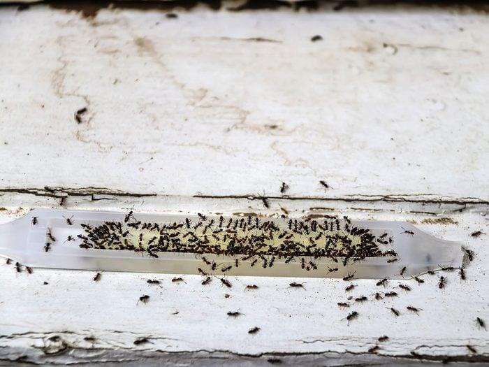 Tendre des pièges pour se débarrasser des fourmis.