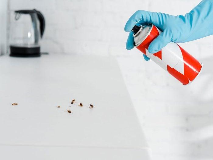 Vaporiser le sentier pour se débarrasser des fourmis.