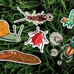 Les 6 pires parasites de jardin – et comment s'en débarrasser naturellement