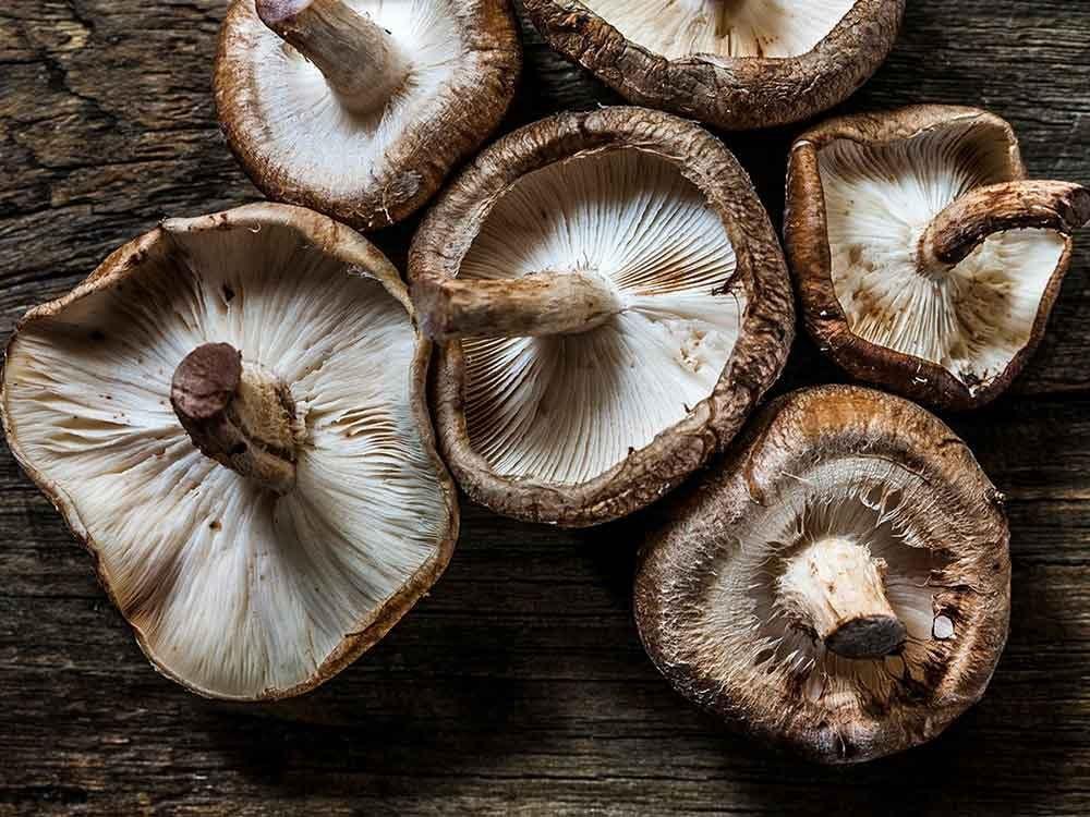 Comment conserver des aliments périssables tels que les champignons?