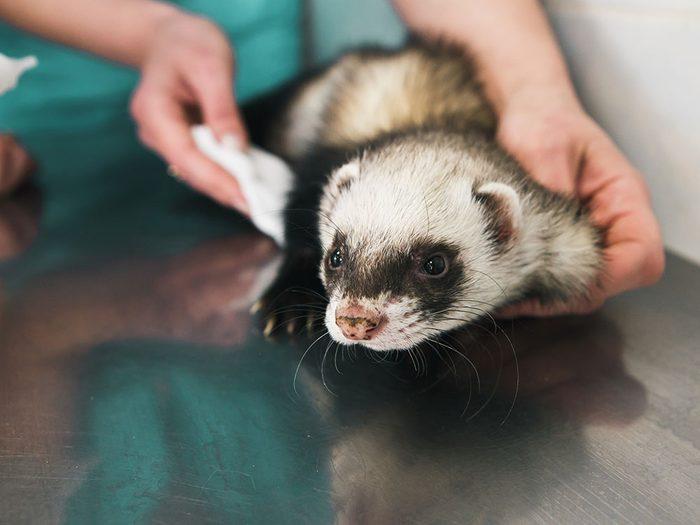 Il est important de trouver le bon vétérinaire pour votre animal de compagnie.