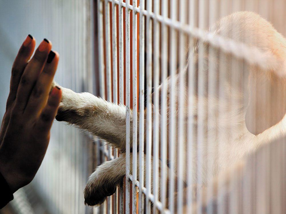 Ce qu'il faut savoir avant d'adopter un animal de compagnie.