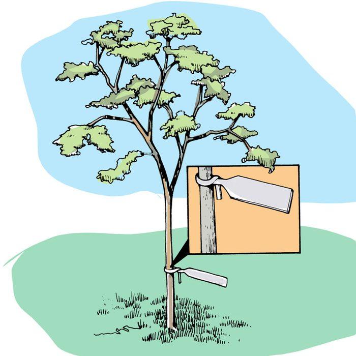 Astuces de bricolage: des étiquettes d'identification pour arbres et plantes.