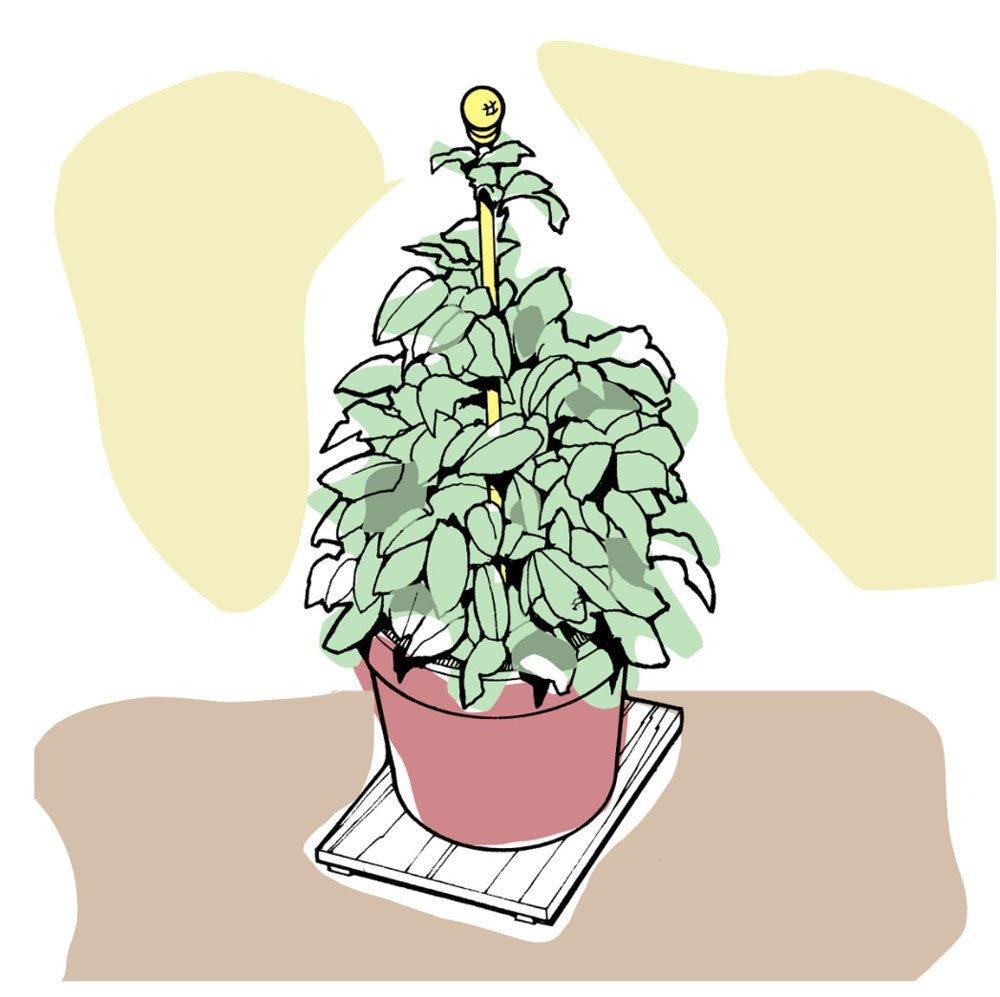 Astuces de bricolage: poteaux de soutien pour plantes.