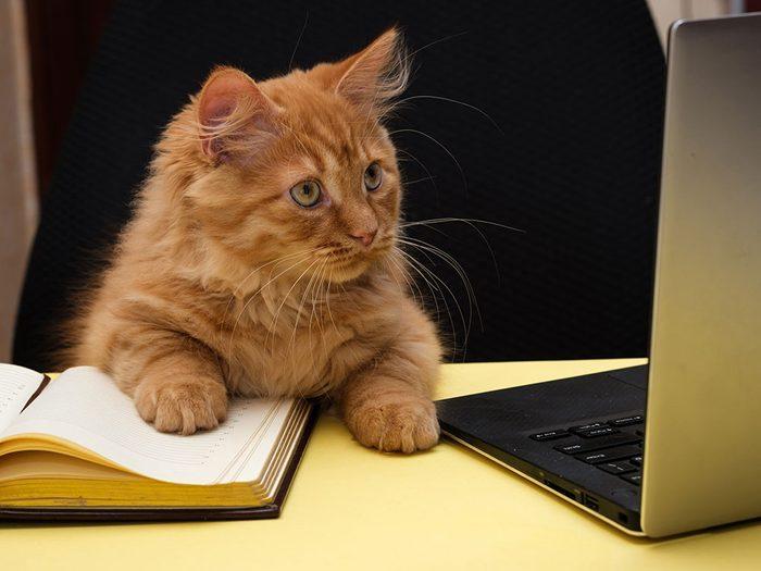 De sérieuses responsabilités pour ce chat en télétravail.