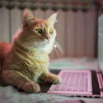 9 photos hilarantes de chats en télétravail