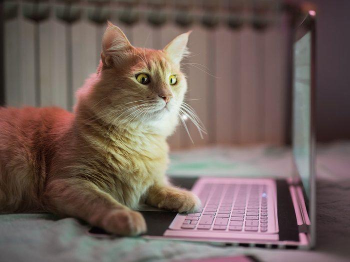 Ce chat rouquin en télétravail a l'air surpris!